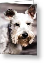 Terrier Upclose Greeting Card