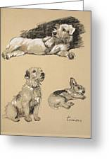 Terriers, 1930, Illustrations Greeting Card