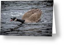 Territorial Canadian Goose Greeting Card