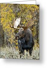 Teton Bull Moose Greeting Card by Gary Langley