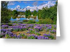 Teton Spring Lupines Greeting Card