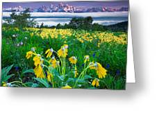 Teton Spring Wildflowers Greeting Card by Jerry Patterson