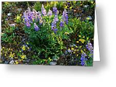 Teton Widflowers  Greeting Card