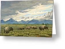 Tetons-buffalo  Greeting Card