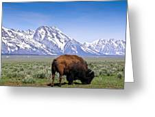 Tetons Buffalo Range Greeting Card