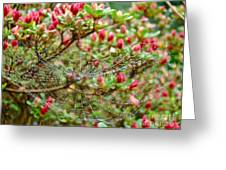 Tetragnathidae Web In Azalea - Cape Cod Ma Greeting Card