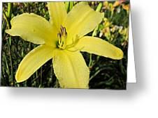 Tetrina's Daughter Daylily Greeting Card