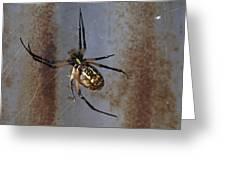 Texas Barn Spider In Web 2 Greeting Card