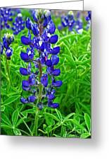 Texas Blue Bonnet Greeting Card