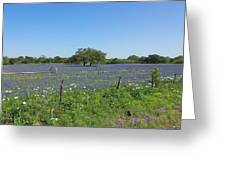 Texas Blue Bonnets Greeting Card by Shawn Marlow