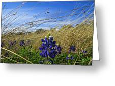 Texas Bluebonnet Center Of Attention Greeting Card