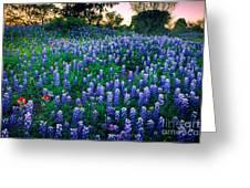 Texas Bluebonnet Field Greeting Card