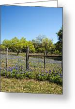 Texas Bluebonnet Lupine Pature Greeting Card