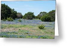 Georgetown Texas Bluebonnet Spring Greeting Card