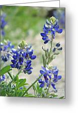 Texas Bluebonnets 01 Greeting Card