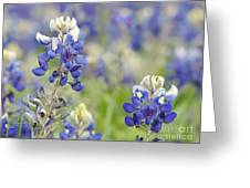 Texas Bluebonnets 03 Greeting Card