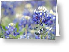 Texas Bluebonnets 05 Greeting Card