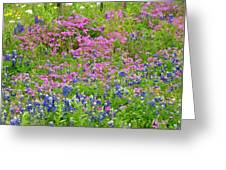 Texas Bluebonnets And Wildflowers Greeting Card