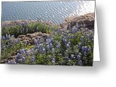 Texas Bluebonnets At Lake Travis Greeting Card