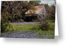 Texas Bluebonnets With Old Abandoned Shack Greeting Card