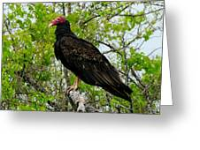 Texas Buzzard - Turkey Vulture Greeting Card