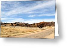 Texas Canyon In February Greeting Card