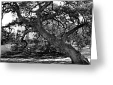 Texas Capitol Tree Greeting Card