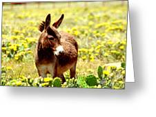 Texas Donkey In Yellow Cacti Greeting Card