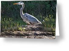 Texas Coastal Birds Greeting Card