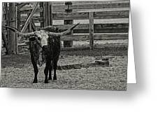 Texas Longhorn Black And White Greeting Card