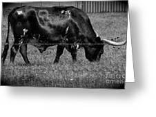 Texas Longhorn IIi Greeting Card