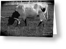 Texas Longhorn Iv Greeting Card