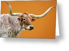 Texas Longhorn Steer Greeting Card