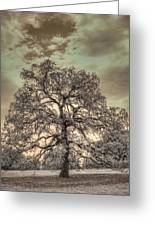 Texas Oak Tree Greeting Card