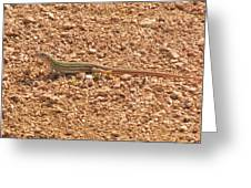 Texas Striped And Spotted Whiptail Lizard Greeting Card