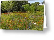 Texas Wildflower Medley Greeting Card
