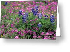 Texas Wildflowers 3 - Fs000930 Greeting Card