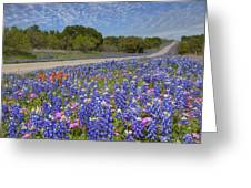 Texas Wildflowers Images - Bluebonnets 2 Greeting Card