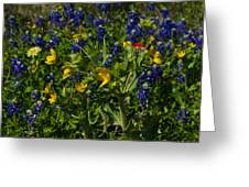 Texas Wildflowers Greeting Card by Kelly Kitchens
