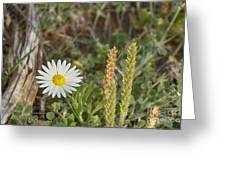 Texas Wildflowers V5 Greeting Card