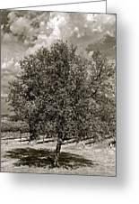 Texas Winery Tree And Vineyard Greeting Card