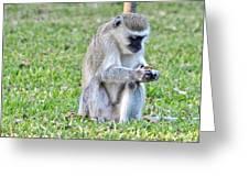 Texting Monkey Greeting Card