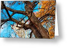 Texture Of The Bark. Old Oak Tree Greeting Card