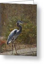 Textured Blue Heron Greeting Card
