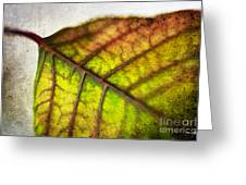 Textured Leaf Abstract Greeting Card