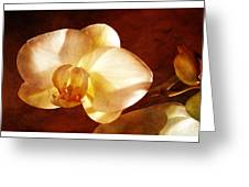 Textured Orchid Greeting Card