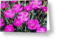Textured Pink Daisies Greeting Card