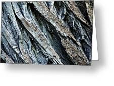 Textured Tree Bark Greeting Card