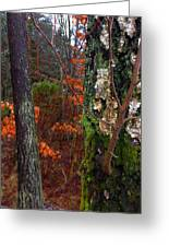 Textures Of Fall Greeting Card