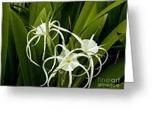 Thailand Beauty Greeting Card